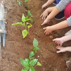 Privilege Kindergarten Gardening